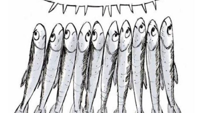 caro-prof-di-fiorenzuola-impari-lei-dalle-sardine